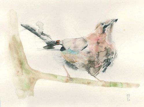 Fine Art Print: Jay