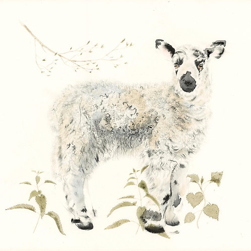 Spring Lamb - Original Drawing