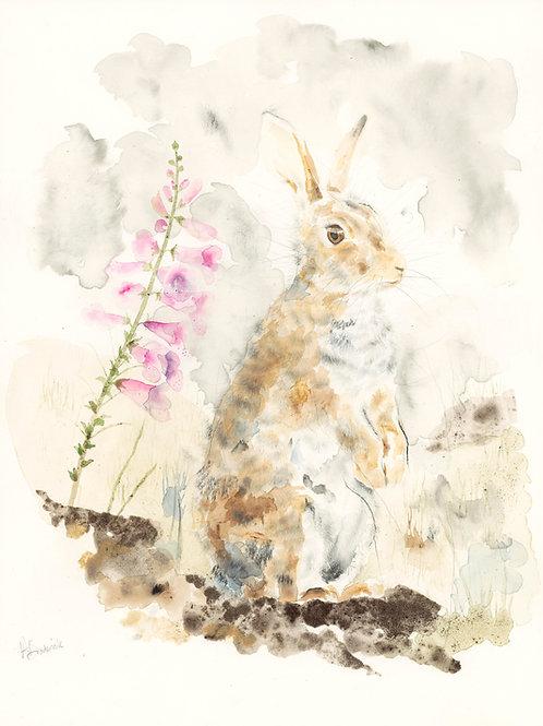 Fine Art Print: Rabbit with Foxglove