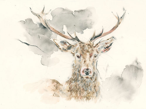 Fine Art Print: Head of a Stag