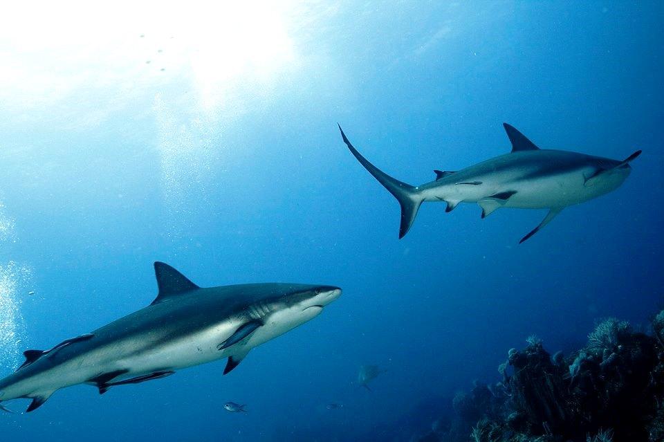 AWARE Shark Specialty