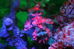 Fluorescence Diving and Photography