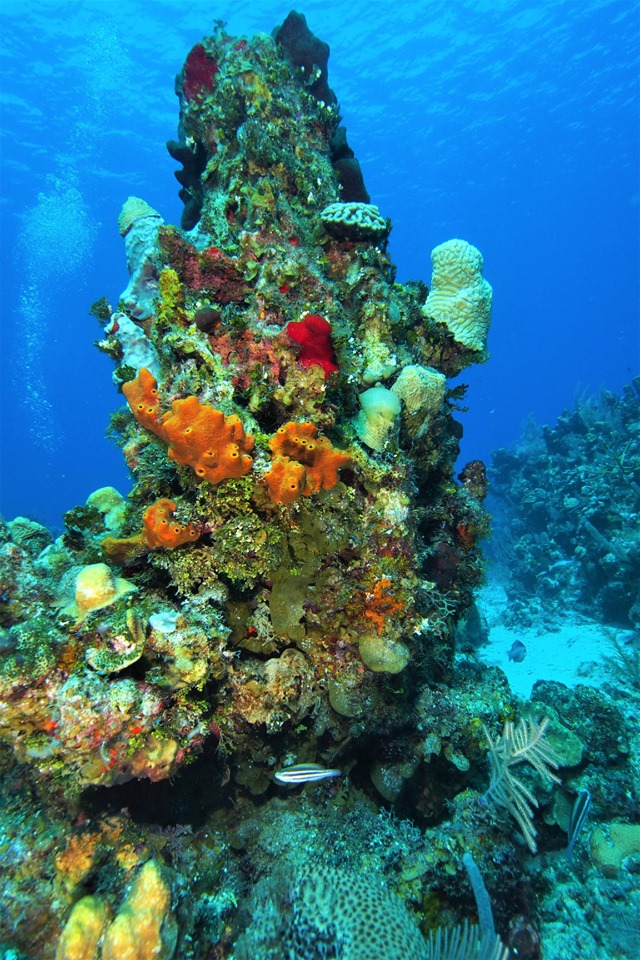 Beautiful Coral Reefs
