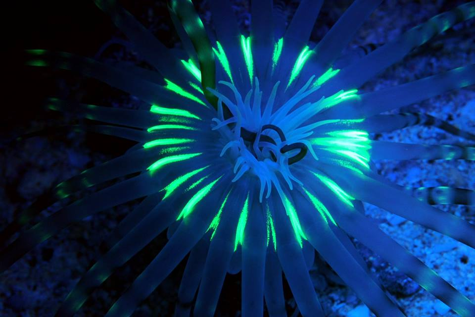 Fluorescence Diving