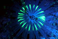 Fluorescence Diving