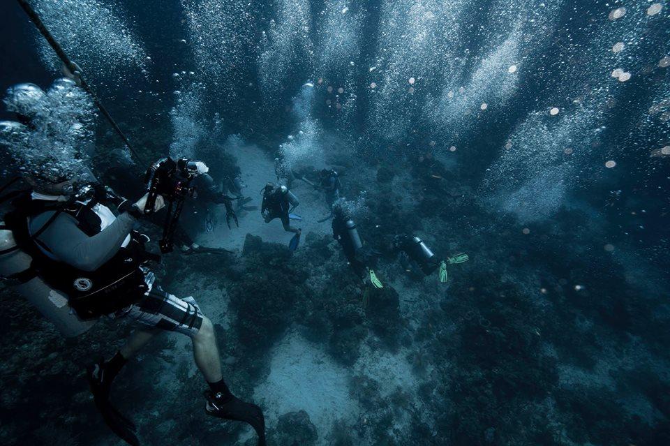 Shark Dive at Cara a Cara