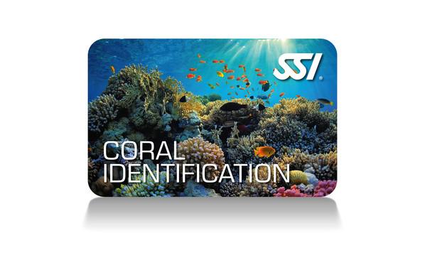 SSI Specialties