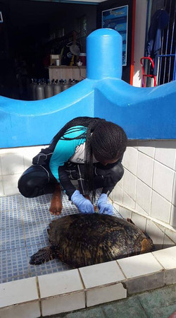 Turtle Research
