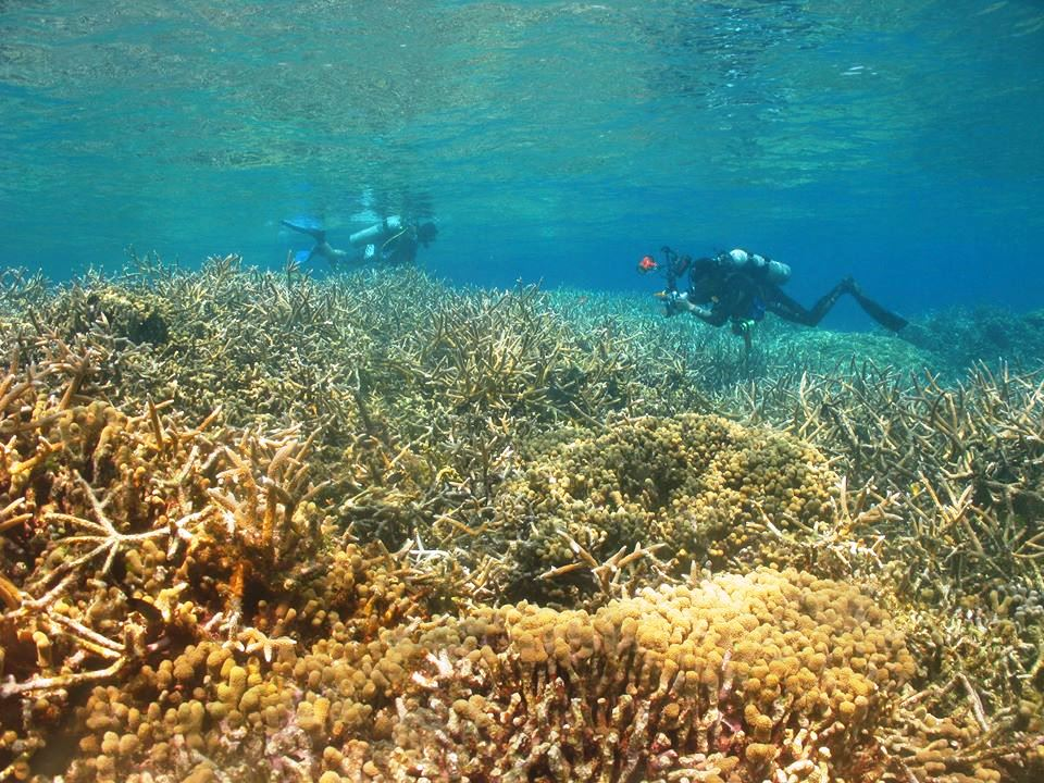 AWARE Coral Reef Conservation