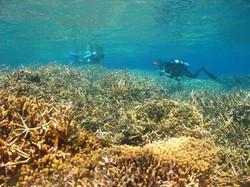 Amazing Reefs