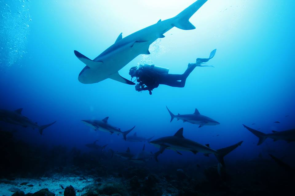 Learn about Shark Conservation