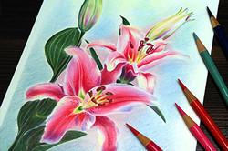 Волшебные лилии