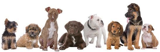 osteopathie-canine.jpg