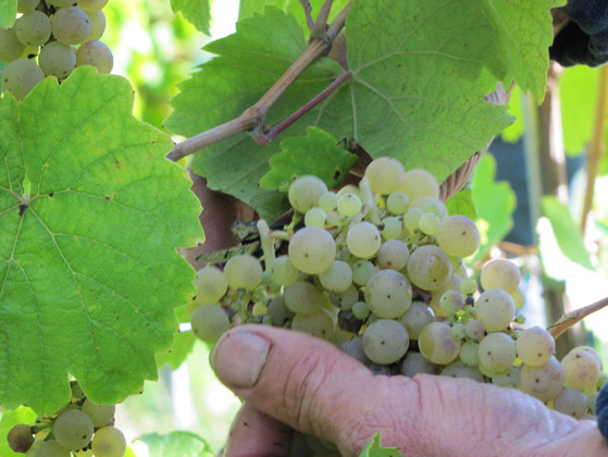 Domaine Sohler, Vins d'Alsace