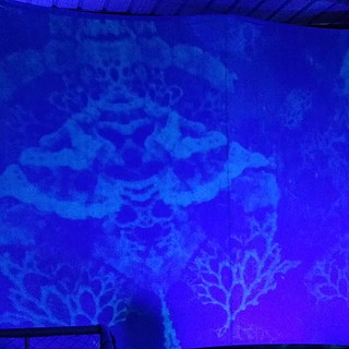 Projection Mapped Fractal Art installation in collaboration with Fractal Abyss, Mote Marine Labratories
