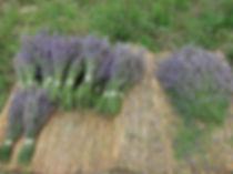 bouquet de lavande de mémé renée