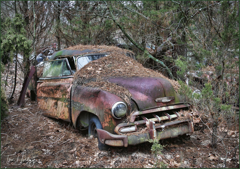 The Sedan in the Pines