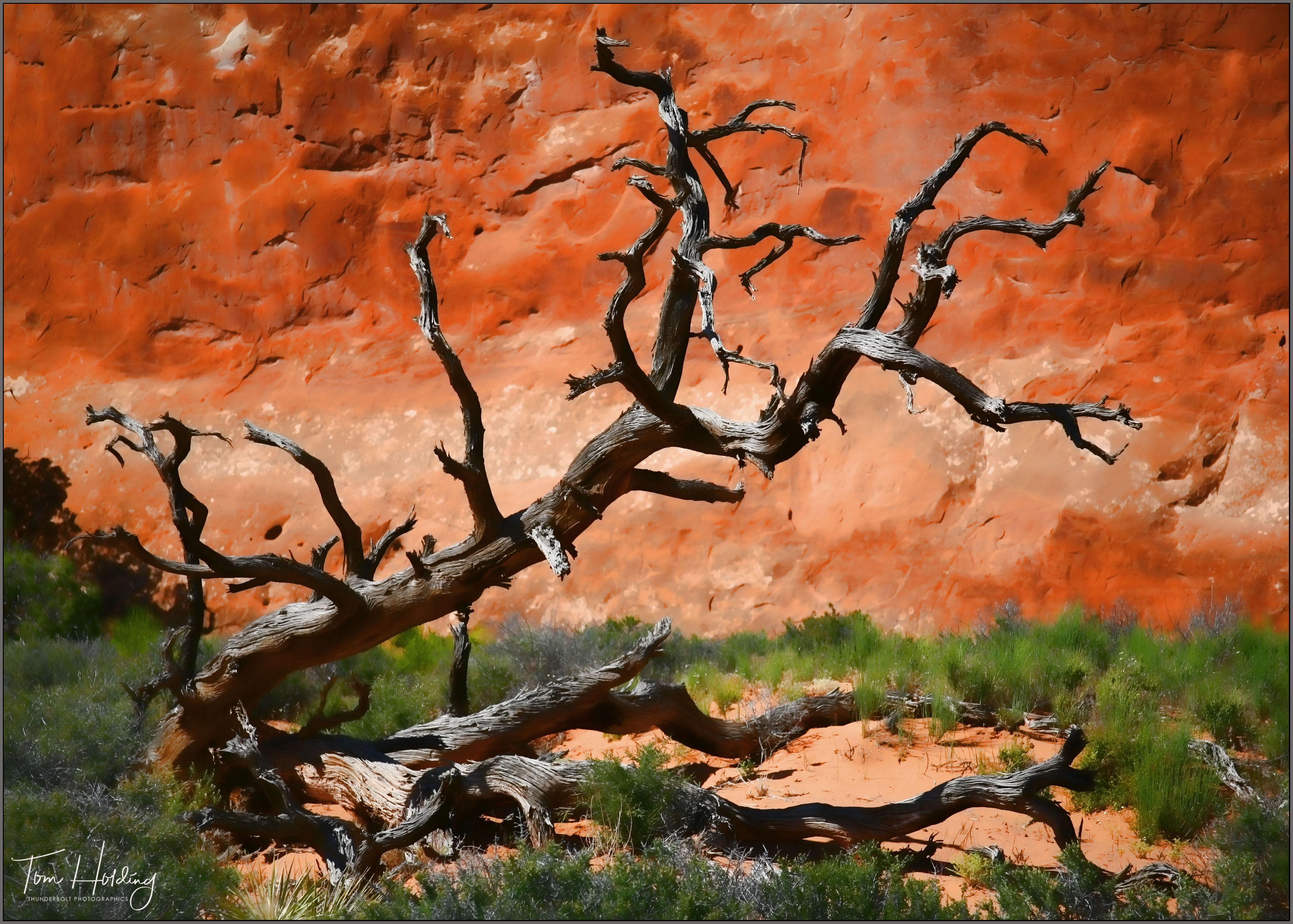Artful Tree