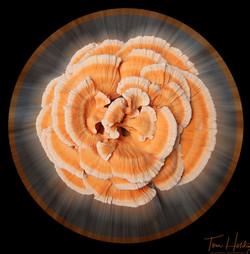 Mushroom Radial