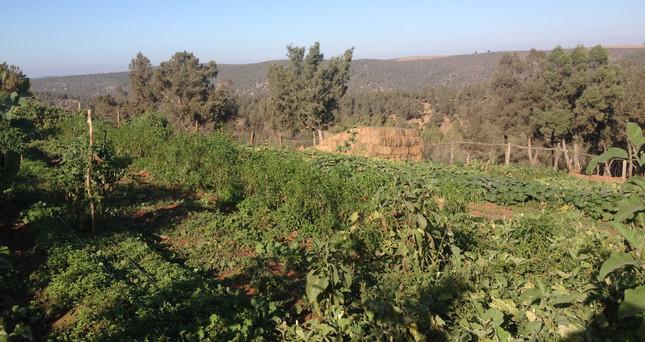 Jardin agro écologique de Rachid 2.jpg