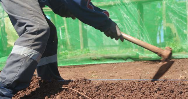 Préparation des terrains 3.jpg