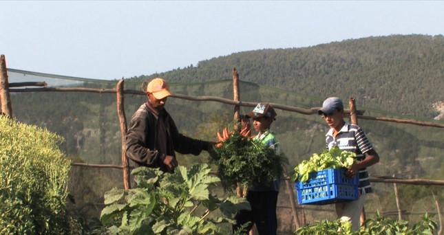 Première récolte jardin agro écologique