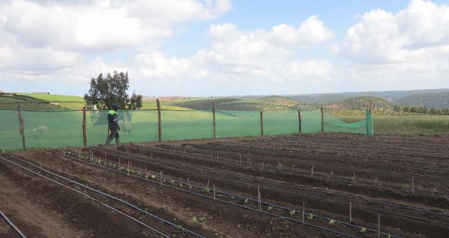 Jardin agro écologique de Rachid 1.jpg