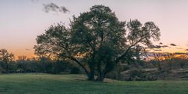 Scenery (3 of 5).jpg