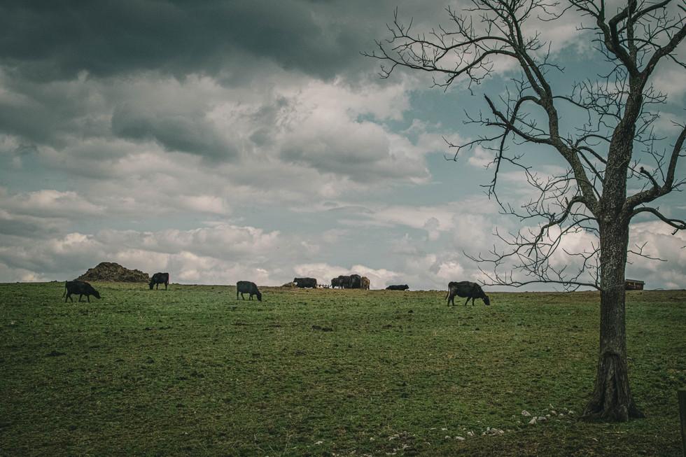 Scenes from a Kentucky Landscape (2 of 6