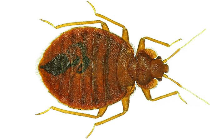 bed bugs pest control mission - 708×445