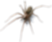 spider 1.png