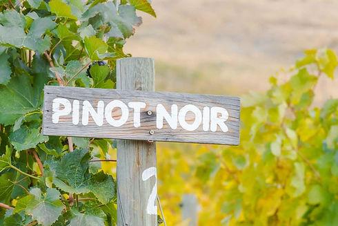 pinot-noir-common-grape.jpg