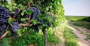 Pinot Noir Taste Profile
