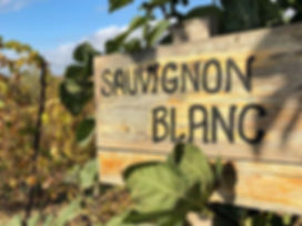 Sauvignon Blanc vineyard sign