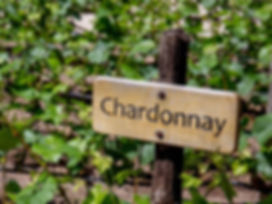 Chardonnay vineyard sign