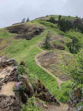 Saddleback Mountain hiking trail in Oregon | commongrape.com
