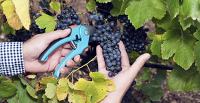 Syrah vs Shiraz: What Is The Difference?