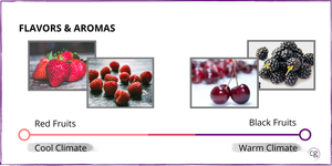 Image showing the range of red wine flavors and aromas from cool climate wines with red fruit notes to warm climate wines with black fruit notes.