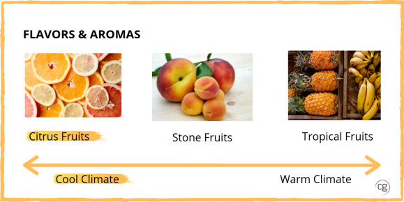 White wine flavors and aromas range from citrus fruits (cool climate) to stone fruit to tropical fruit (warm climate). Sauvignon Blanc has citrus notes.