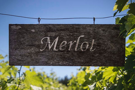 Merlot vineyard sign