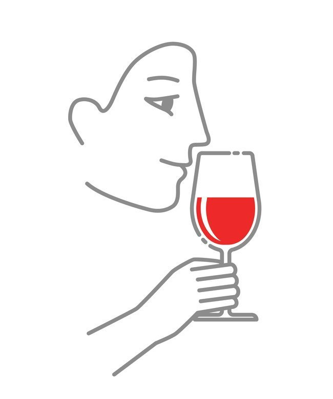 Illustration of second step of tasting wine which is to smell the aromas of wine in a wine glass.