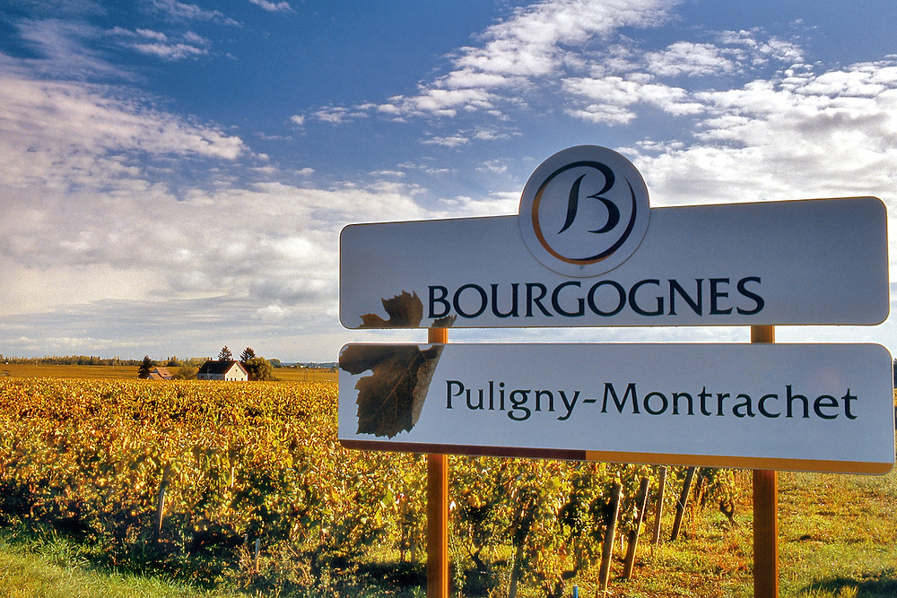 Vineyard with sign for Puligny-Montrachet in Bourgognes.