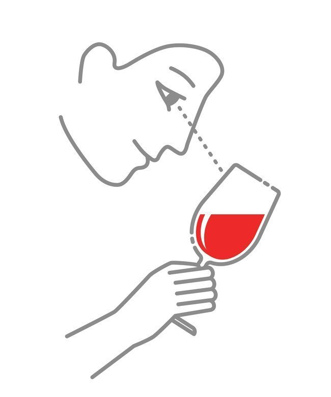Illustration of first step of tasting wine. The Wine glass is tilted to a 45-degree angle to evaluate the color of the wine.