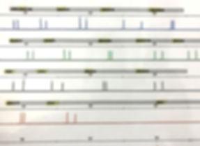 DNA-17 expert
