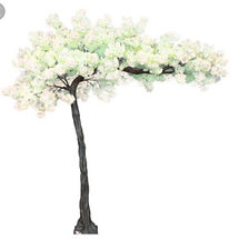 These beautiful trees will be available