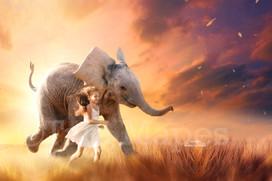 Elephant baby in field
