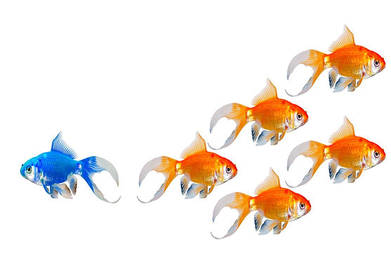 Fish modified for website.jpg