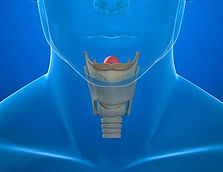 Perfil Tiroideo Importancia