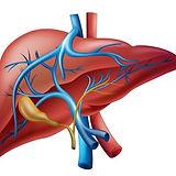 Enfermedades del Hígado, MSN Salud Noticias