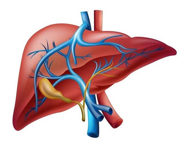 El Hígado como órgano, artículo de enfermedades del hígado